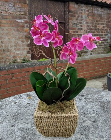 Artificial Orchid in Seagrass Rope Basket