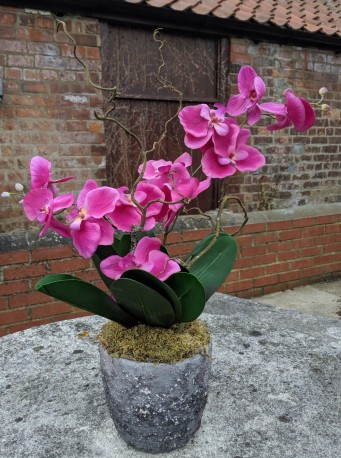 Artificial Orchid in Volcanic Rock Effect pot (50cm)