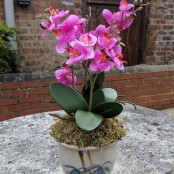 Artificial Orchid in Bamboo Pot