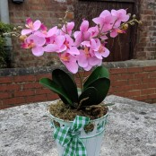 Artificial Orchid in Tinware Pail