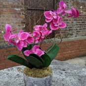 Artificial Orchid in Volcanic Rock Effect pot (50cm)